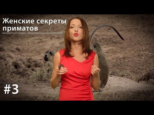 Евгения Тимонова Женские секреты приматов eva mosaic eyebrow stylist gel