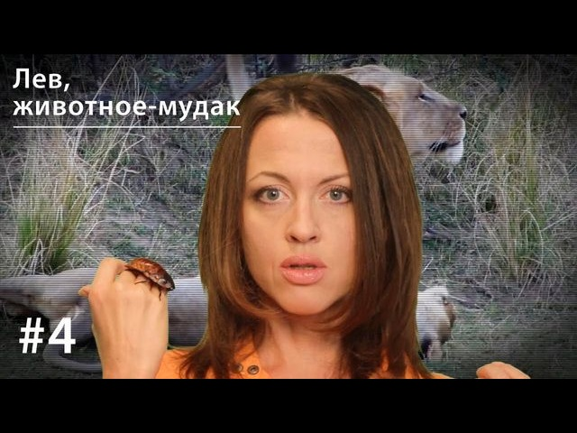 Евгения Тимонова Лев: животное-мудак