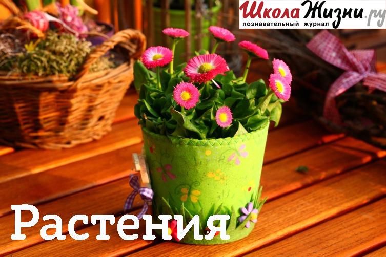 Татьяна Кардаполова Что такое ?