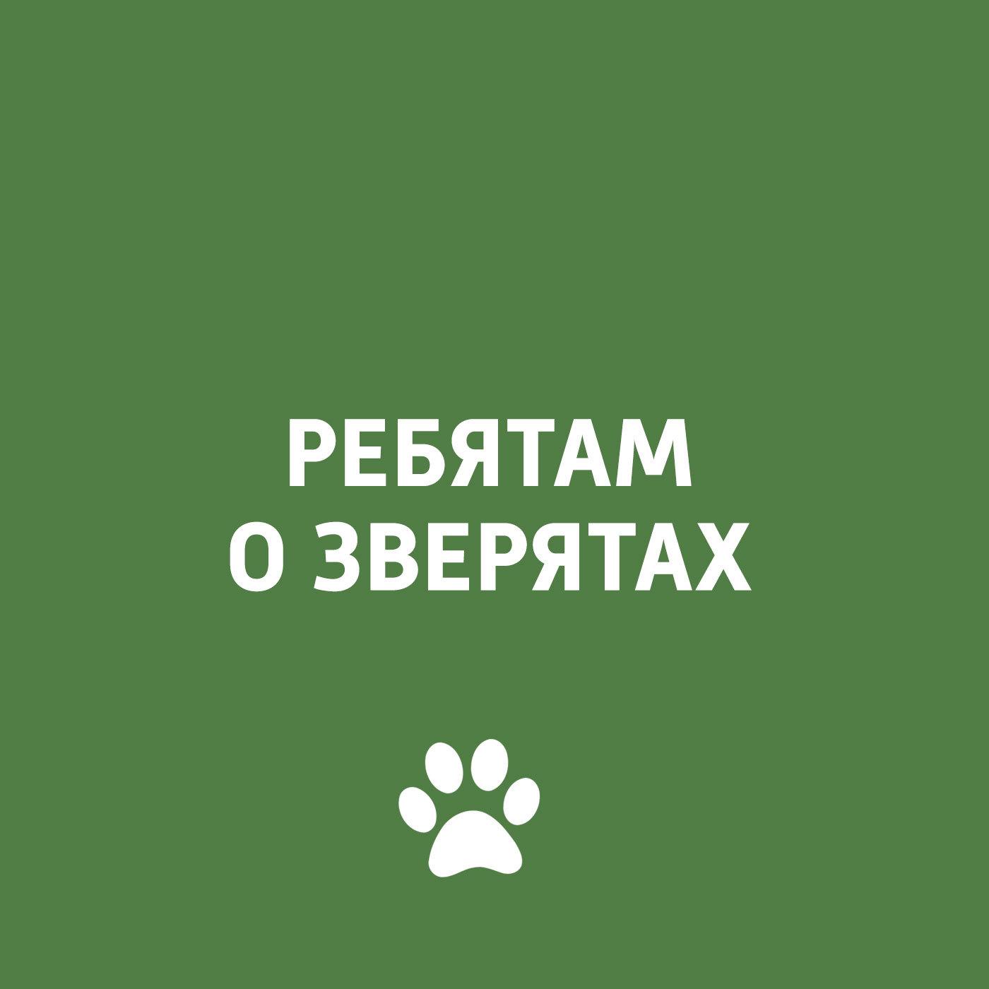 Творческий коллектив программы «Пора домой» Стресс у собак творческий коллектив программы пора домой вирусные заболевания у кошек и собак