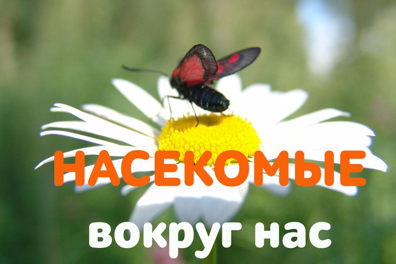 Пономарева Валентина Зачем тебе жужжать, если ты не пчела? Европейская символика образа