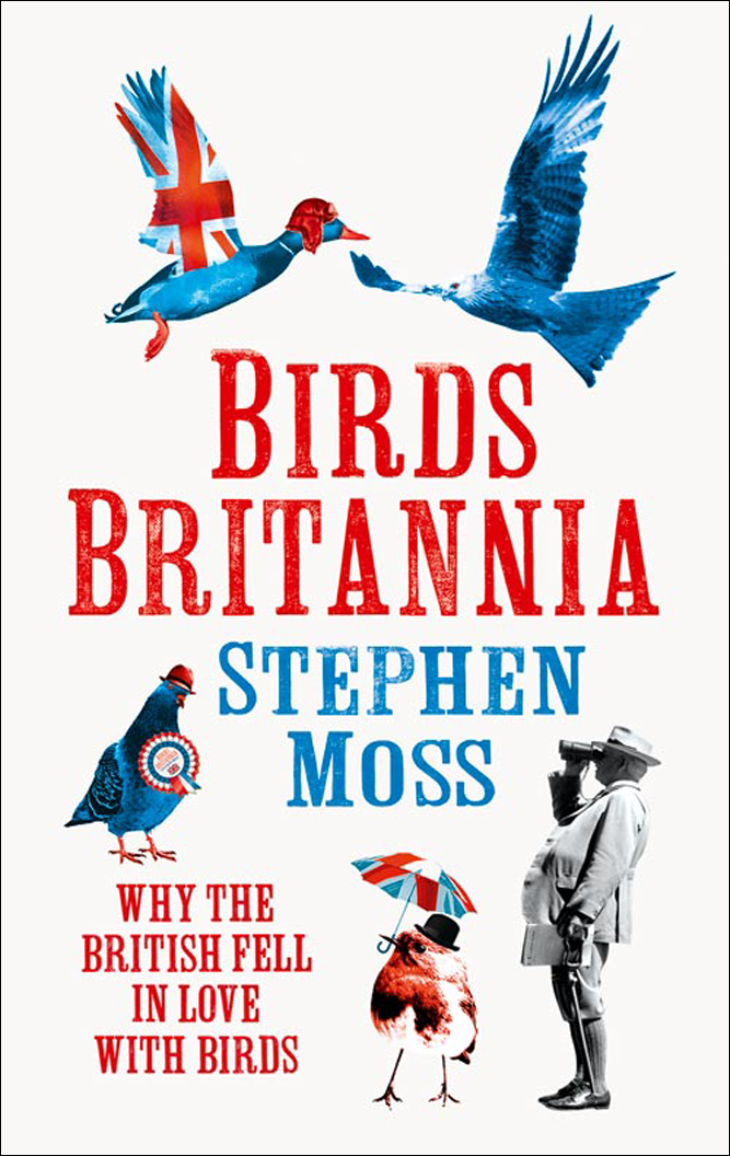 Stephen Moss Birds Britannia brokis night birds silhouette of birds in the evening sky freedom of bird flight a poetic charm and unprecedented dynamism