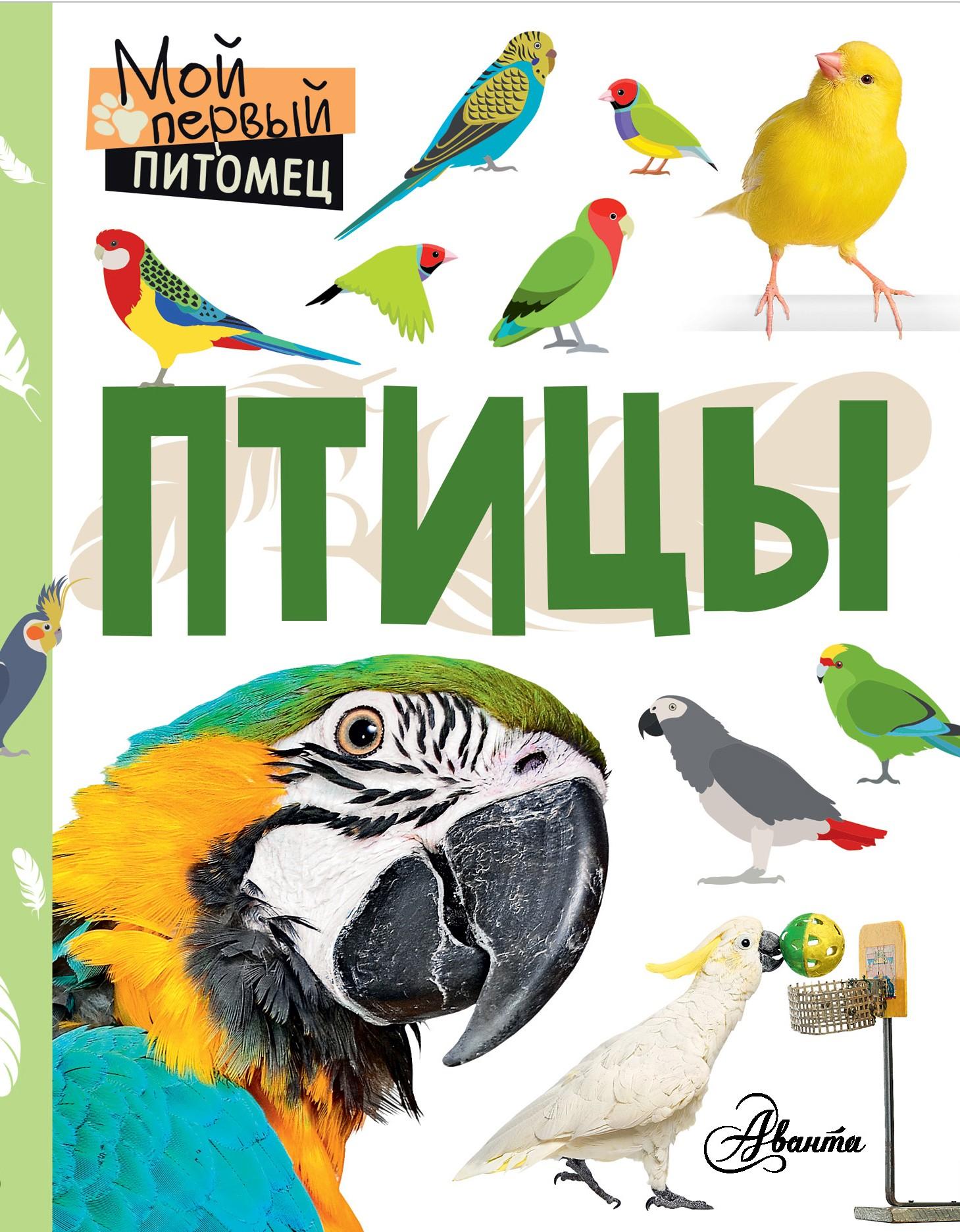 Наталия Аронова Птицы наталия аронова птицы