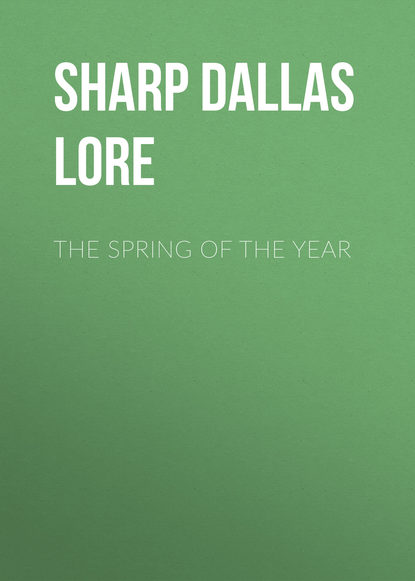 Sharp Dallas Lore The Spring of the Year недорого