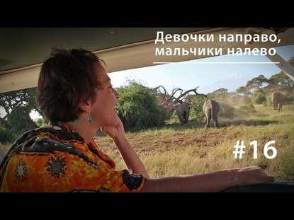 Евгения Тимонова Девочки направо, мальчики налево: планирование семьи у африканских слонов