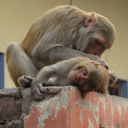 Фото - Дмитрий Гайдук Про царя обезьян дмитрий гайдук про корову