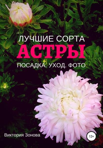 Виктория Зонова Астры. Лучшие сорта виктория зонова клематисы лучшие сорта