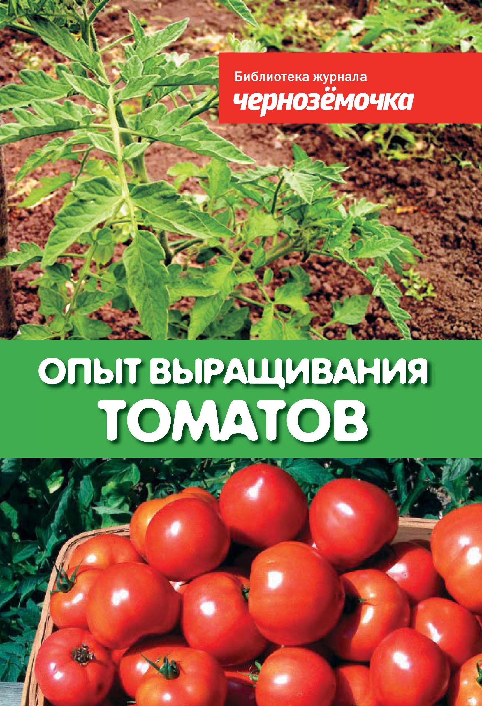 Опыт выращивания томатов