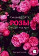 Розы. Лучшие сорта