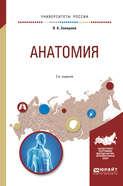 Анатомия 2-е изд., испр. и доп. Учебное пособие для вузов