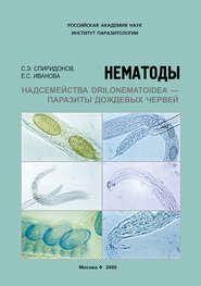 Нематоды надсемейства Drilonematoidea – паразиты дождевых червей